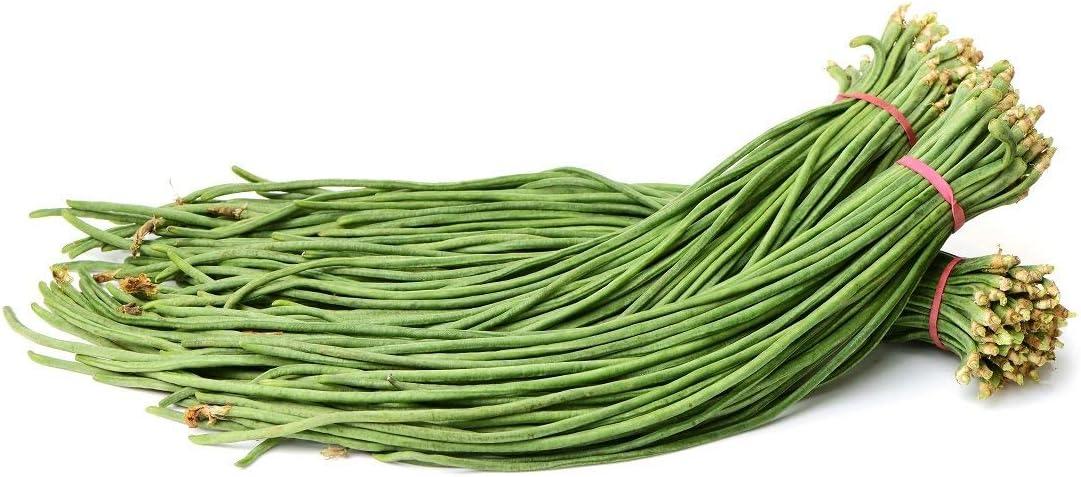 """30 graines Niébé /""""Metro rouge/"""" idéal pour les spaghettis de légumes"""