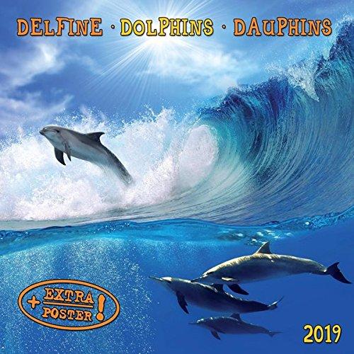 Dolphins Delfine 2019  Kalender 2019  Artwork Edition