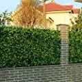 ULAND 20''x20''/pc Artificial Topiaries Fence Mat, Boxwood Panels, UV Weather-resistant, Outdoor/Indoor Decoration, Garden Privacy Fence