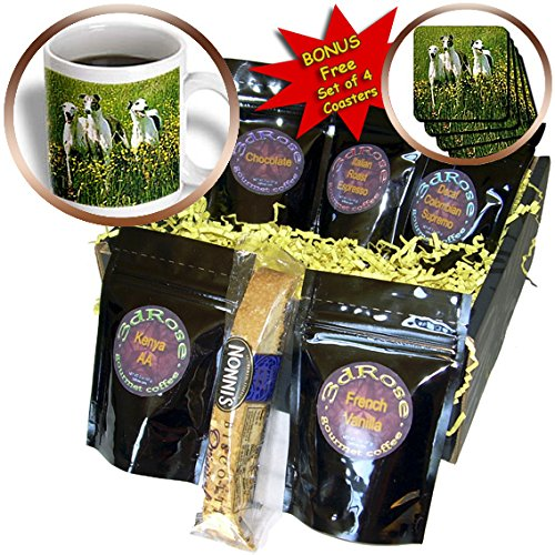 dogs-greyhound-greyhound-coffee-gift-baskets-coffee-gift-basket-cgb-483-1