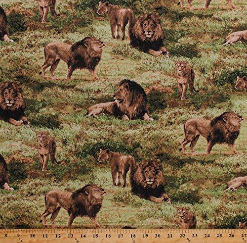 Cubs Pride Animals Predators Big Cats Africa African Safari Scenic Savanna Wildlife Nature Born Free Cotton Fabric Print by the Yard (112-31911) (African Safari Fabric)