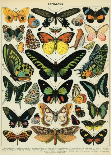 Decorative Wrap 20X28 - Art Poster Butterfly