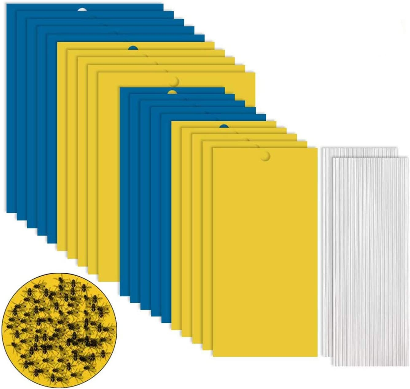 GiantGo 40 Piezas Trampas de Insectos de Doble Cara - Trampas Adhesivas de Doble Cara - Atrapa Insectos para Moscas, Insectos, Piojos, Atrapa, Polillas, Áfidos, 40 Piezas 2 Tamaños 2 Colores