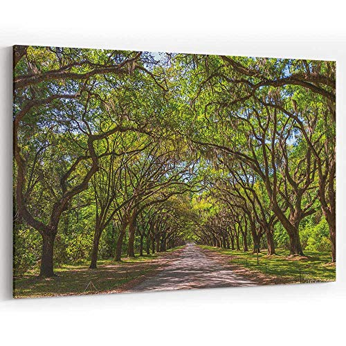 - Canopy of Old Live Oak Trees Draped in Spanish Moss Canvas Prints Wall Art,Modern Home Decor