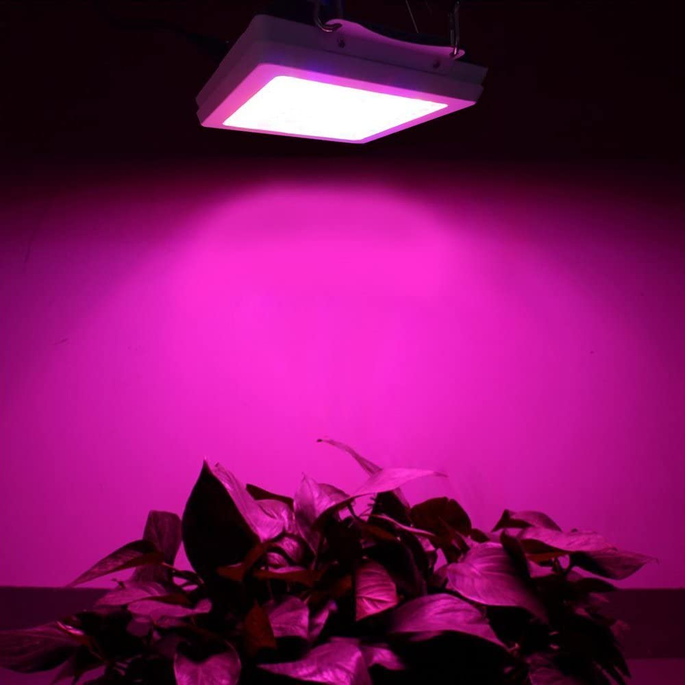 LED Grow Light Full Spectrum 1000w Dank 600 Double Chip Horticulture Greenhouse Lamp for Indoor Grow Tent Plants Veg Bloom