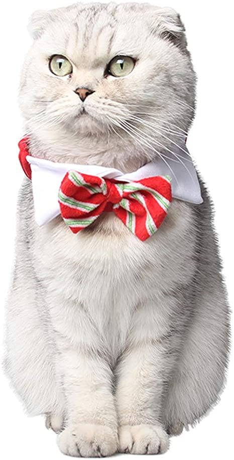 ZuckerTi - Corbata para Perro, Gato, Mascota, Mascota, Collar ...