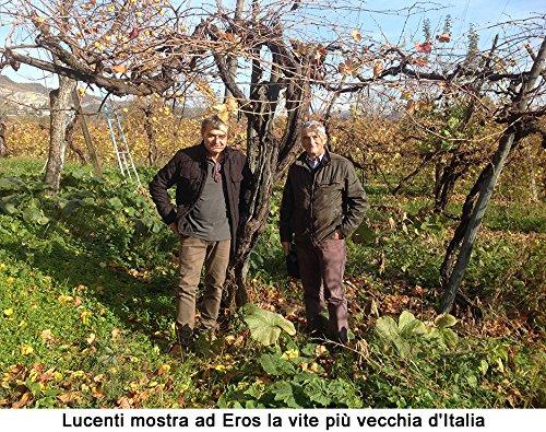 Traditional Balsamic Vinegar of Reggio Emilia PDO ''Golden Seal'', 3,5 oz. Least 25 years old + glass tic by Azienda Agricola Lucenti - Castellarano (RE) - Italy (Image #4)