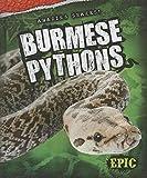 Burmese Pythons (Amazing Snakes!)
