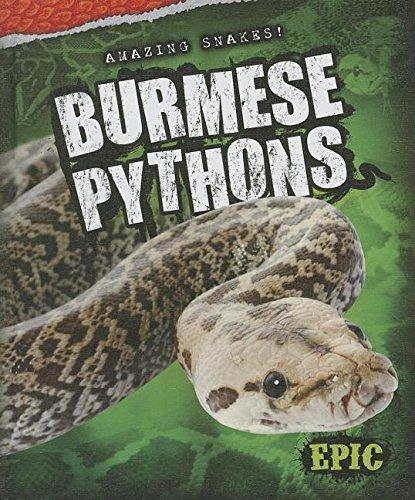 Burmese Pythons (Amazing (Burmese Rose)