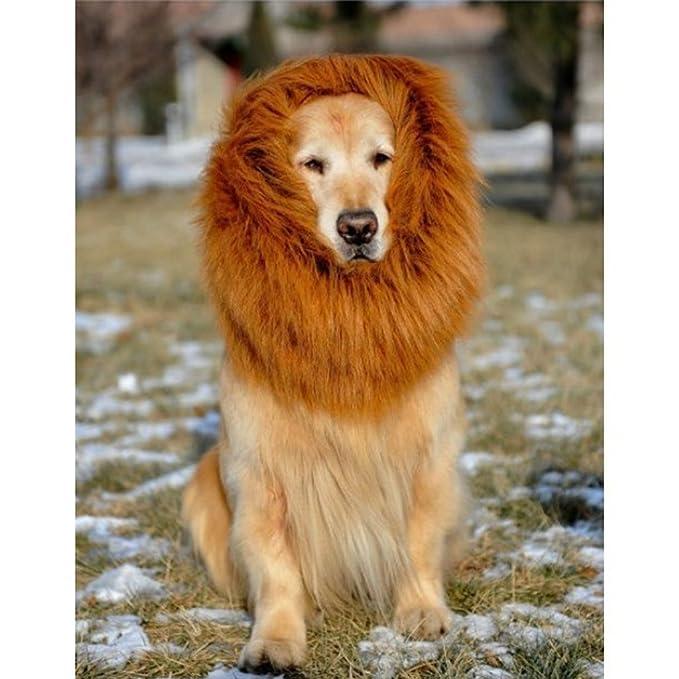 Peluca de melena de León para ropa de Halloween de perro disfraz - marrón: Amazon.es: Productos para mascotas