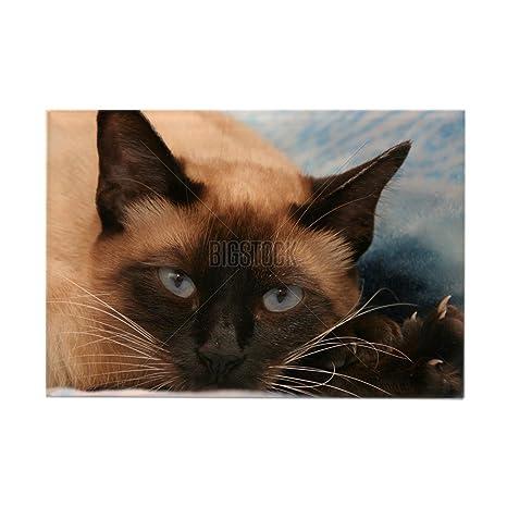 CafePress gato siamés – Rectángulo Imán