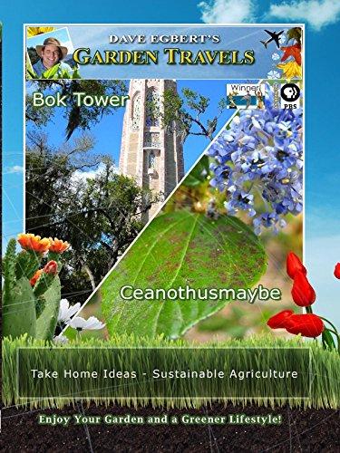 Garden Travels - Bok Tower - Ceanothusmaybe