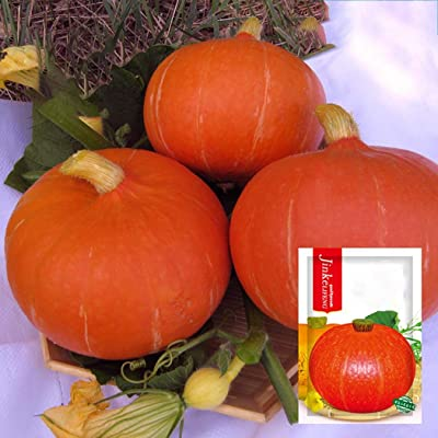Determina Garden - Squash Pumpkin Seeds, 5Grams Organic Chestnut Flavor Little Pumpkins, Easy to Grow Vegetable Seeds: Clothing