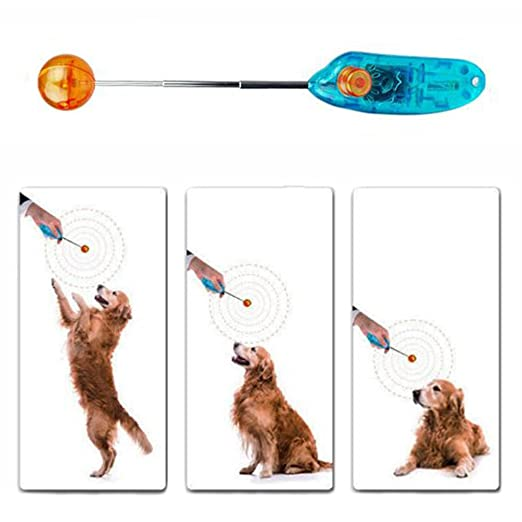 sijueam Perros 95056 Clicker Clicker Entrenamiento para perros y gatos mascotas juguete con Target Stick Naranja: Amazon.es: Productos para mascotas