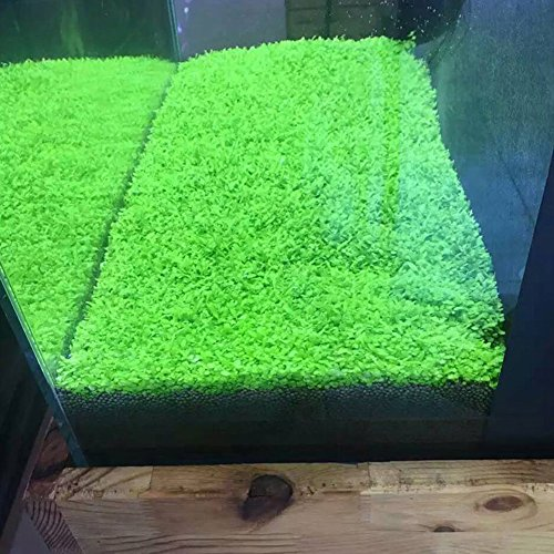 Aquarium-Plants-Seeds-Aquatic-Double-Leaf-Carpet-Water-Grass-for-Fish-Tank-Rock-Lawn-Garden-Decor
