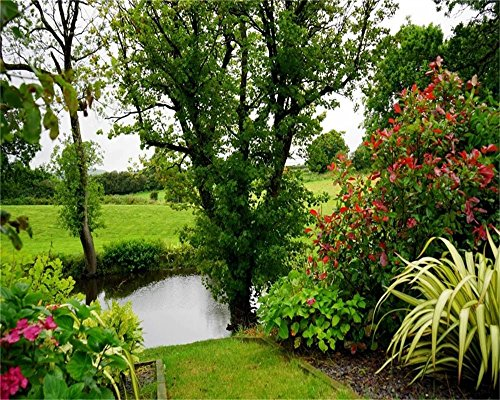 AOFOTO 10x8ft Beautiful Garden Landscape Backdrop Pond Tree Bushes Green Grass Photography Background Summer Colorful Botanical Plant Lawn Meadow Spring Grove Scenery Park Gardening Photo Studio Props -