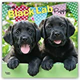 Black Labrador Retriever Puppies 2018 12 x 12 Inch Monthly Square Wall Calendar, Animals Dog Breeds Retriever Puppies (Multilingual Edition)
