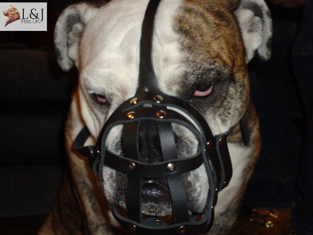 L& J Pets Uk Lumière Cuir Muselière pour Bulldog anglais et d'autres chiens avec court museau Champion for L&J Pets UK