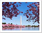 barewalls Washington Dc Cherry Blossom Paper Print Wall Art