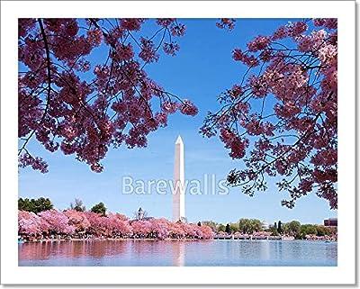 barewalls Washington Dc Cherry Blossom Paper Print Wall Art