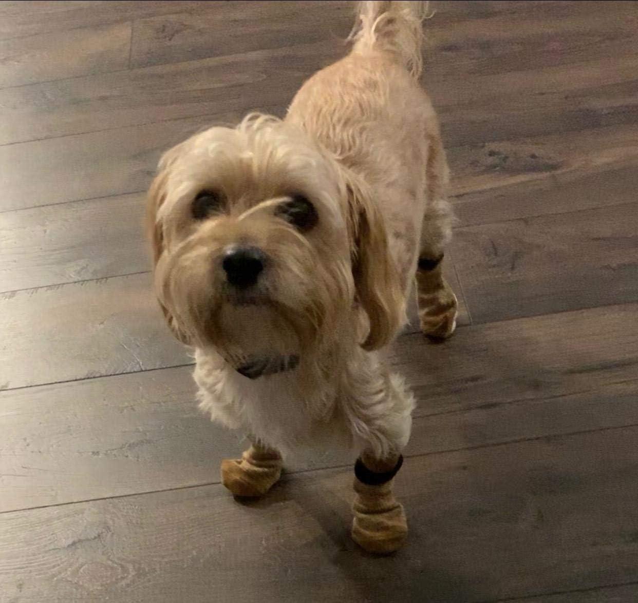 Comprar calcetines para perros pequeños