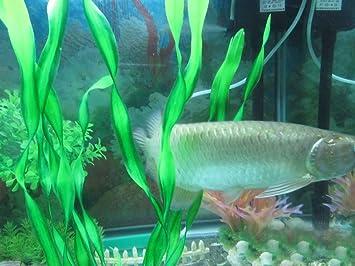 Largo Artificial simulación plantas respetuoso con el medio ambiente de plástico acuario Decoración Fish Tank vitalidad