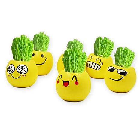 CADANIA Lindo Emoji Expresión Mini Bonsai DIY Hierba Escritorio de ...