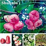 Rare Fruit Wax Seed Organic Non-GMO Bonsai Tree Perennial Outdoor Shrub Seed For Garden Orchard Blooming Plants 30 Pcs