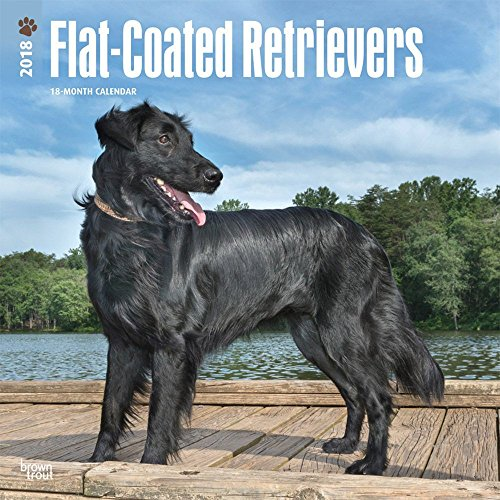 Flat-Coated Retrievers 2018 Wall Calendar ()