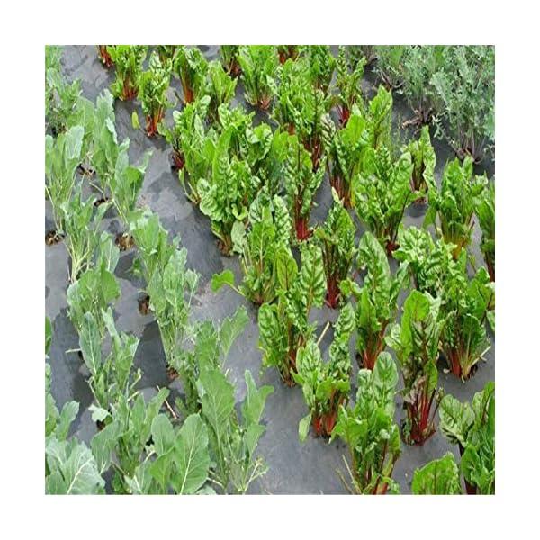 Piantagione di piante per il controllo delle erbacce - Barriera erbaccia per copertura suolo - Ecologica per il… 7 spesavip