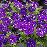 2018 Hot Sale!! Maslin Garden Bonsai Petunia 'Night Sky Blue' Flowers, 200pcs 'Seeds' White Speckles Against The deep Blue Petals Single Petal