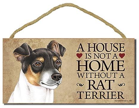 Amazon.com: Rata Terrier