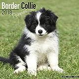 Border Collie Puppies Calendar - Dog Breed Calendars - 2017 - 2018 wall Calendars - 16 Month by Avonside