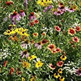1lb seeds Wildflower Pollinator Mix - Bees Butterflies - Sunflower Coneflower Milkweed
