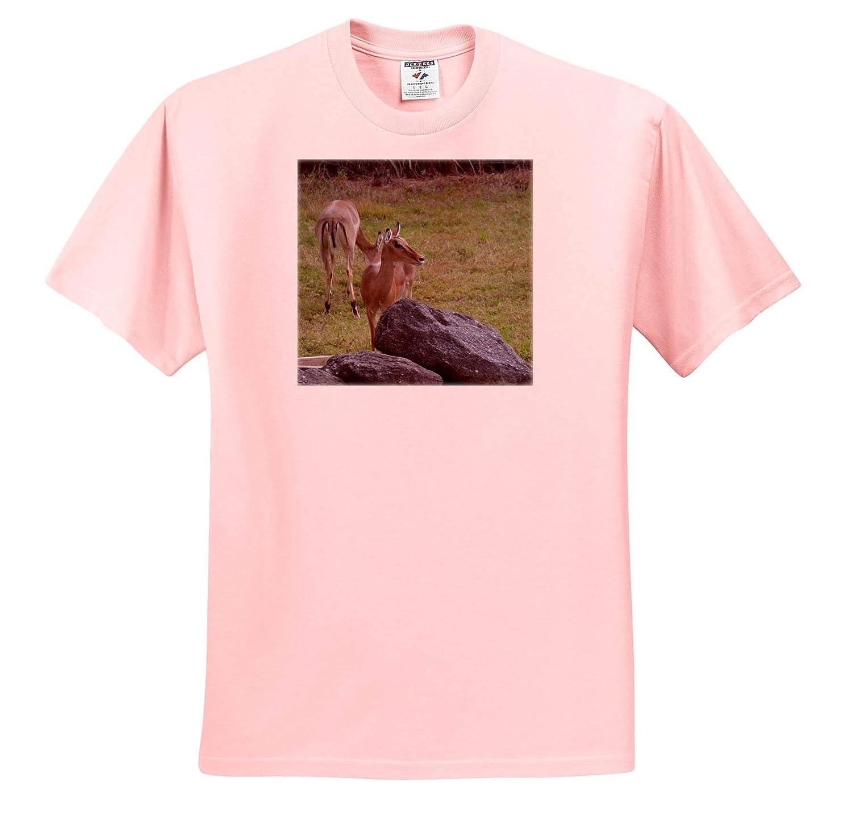 Small Deer Antelope Behind Rock 3dRose Susans Zoo Crew Animal T-Shirts