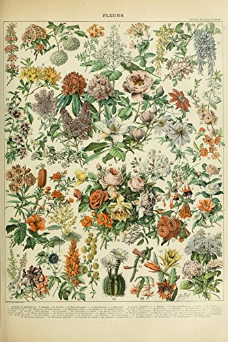 Assorted Flowers - C - Vintage Bookplate - Adolphe Millot Artwork (12x18 Art Print, Wall Decor Travel Poster)
