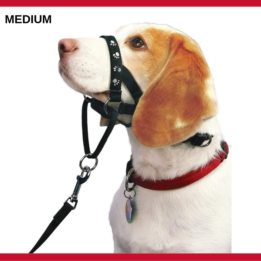 Mikki Arnés para Perros y Cachorros Collar de Paseo -Anti tirones ...