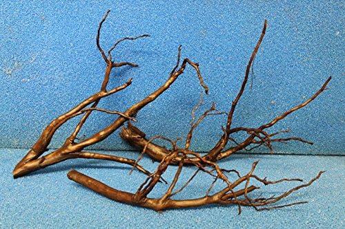 Moorkienwurzel-Garnelenbäumchen-Wurzel