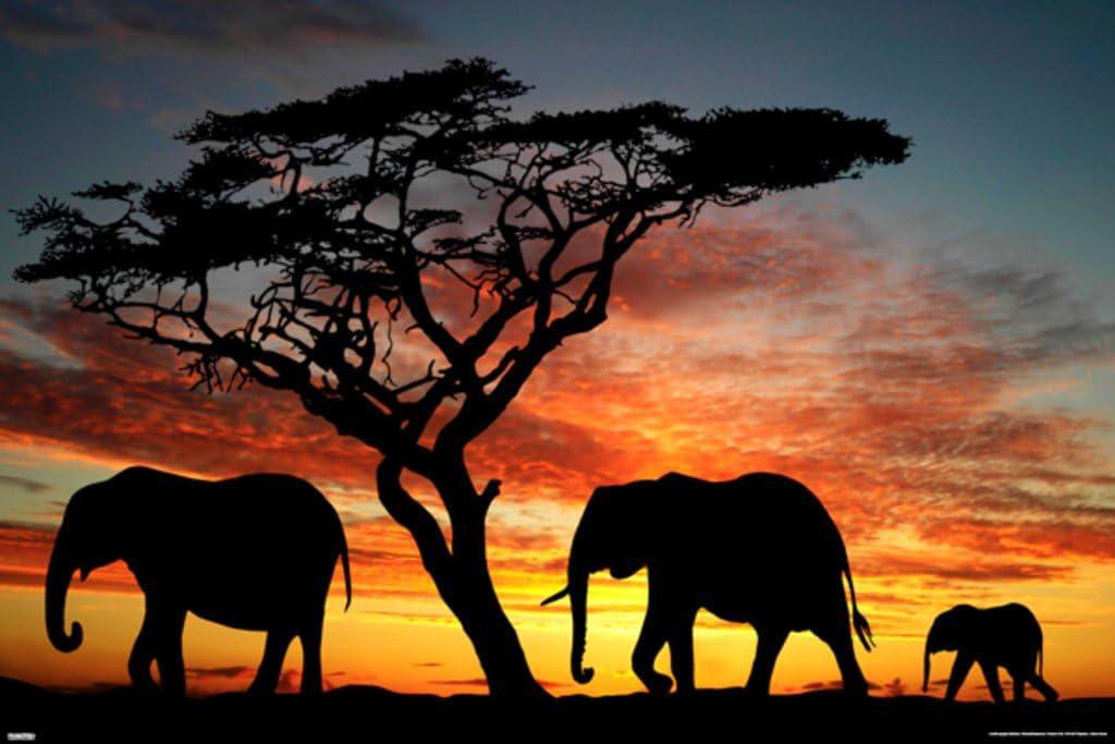 Pyramid America Elephants African Sunset Photo Photograph Cool Wall Decor Art Print Poster 36x24