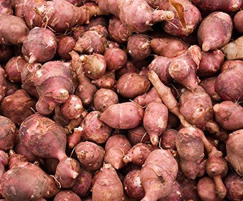Jerusalem Artichoke (Organic) 1 Pound - Hardy Red Fuseau Variety - (Sunroot 'chokes or Sunchoke) by Yumheart Gardens