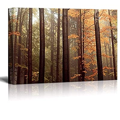 Charming Artistry, Forest with Tall Trees and Yellow Leaves, Premium Creation