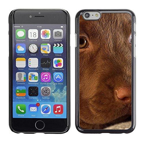 """Premio Sottile Slim Cassa Custodia Case Cover Shell // V00003211 mignon chiot labrador // Apple iPhone 6 6S 6G PLUS 5.5"""""""