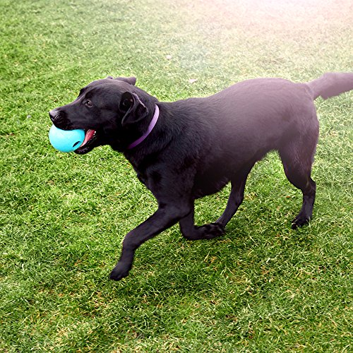 Rocco & Roxie Dog Toys Balls - Tough Nearly Indestructible Toy for All But the Most Aggressive Chewers - Balls for Large and Small Dogs - Made in USA (Powder Blue 4 inch ball) by Rocco & Roxie Supply Co (Image #5)