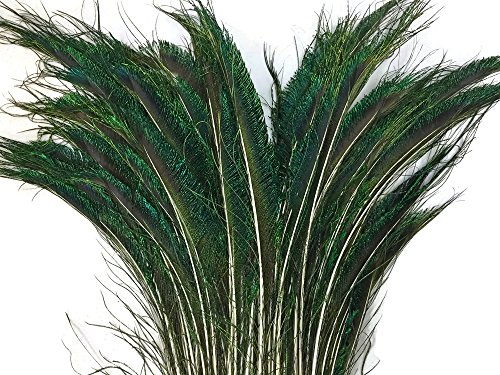 Moonlight Feather | 50 Pieces Peacock Feathers - Natural 10-12