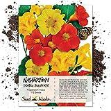 Package of 110 Seeds, Nasturtium Double Gleam (Tropaeolum majus) Seeds By Seed Needs