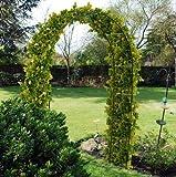 2,4 m da giardino in acciaio arco per ROSE per le piante rampicanti PERGOLA
