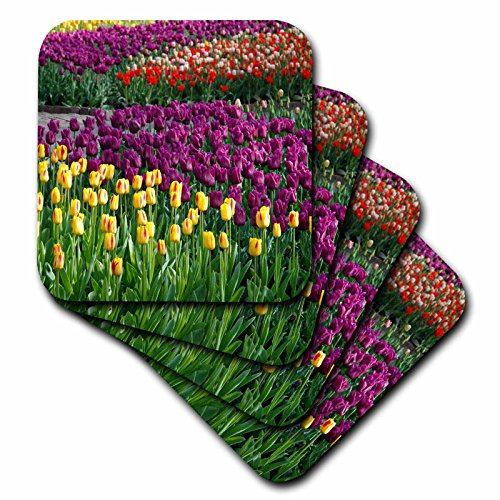 3dRose CST_47802_1 Fields of Tulip Flowers Spring Colors Photography Soft Coasters, Set of 4