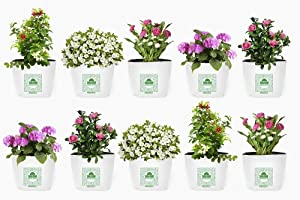 Shalimar Poly Grow Bags (UV Stabilized) Size (Length - 16 cm X Width - 16 cm X Height - 30 cm) (Set of 10 Bags)
