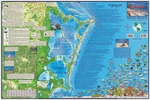 Amazon.com : Cancun & Riviera Maya Mexico Dive Map Laminated Poster ...