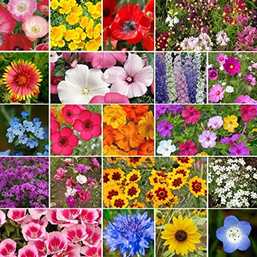 davids-garden-seeds-wildflower-all-annual-seed-mix-dgs111ope-multi-1000-open-pollinated-seeds